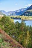 Altai rzeczny Katun blisko górskiej wioski Chemal, Rosja Fotografia Royalty Free