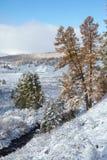 Altai sotto neve Immagini Stock