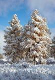 Altai sotto neve Fotografia Stock Libera da Diritti