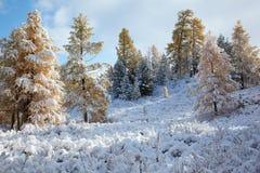 Altai sotto neve Immagini Stock Libere da Diritti