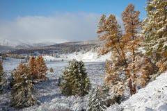 Altai sotto neve Immagine Stock