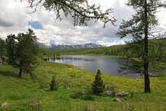 Altai statlig naturlig Biospheric reserv, Ryssland Arkivfoton