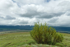 Altai: steppe bush plants Royalty Free Stock Photos