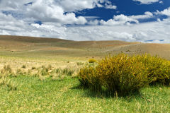 Altai: steppe hills clouds. The summer Altai landscape (Russia): steppe covered by partially dry grass (some plants), a bush with yellow flowers as a foreground Royalty Free Stock Photography