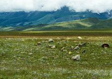 Altai: steppe mountains stones Stock Photography