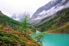 Altai. Territory is geographically located in the north-western slopes of the huge -Sayan mountain country and the south-eastern edge of the West Siberian Plain Royalty Free Stock Image