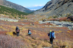 Altai territory, Ust-Koksinsky district, Russia, September, 08, 2016. Tourists with backpacks walking along the riverbed of Accha Royalty Free Stock Image