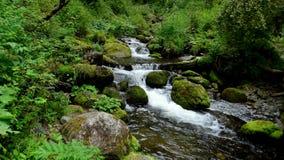 altai Um rio pequeno da montanha Fotos de Stock Royalty Free