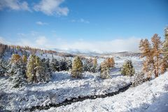 Altai under snow Royalty Free Stock Images