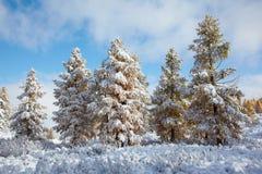 Altai under snow Stock Images
