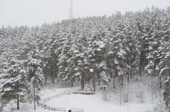 Altai-Wald Stockfotos