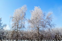 Altaic winter. Cool snow winter came to steppe Altaya Royalty Free Stock Photography