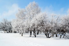 Altaic winter. Cool snow winter came to steppe Altaya Stock Photos