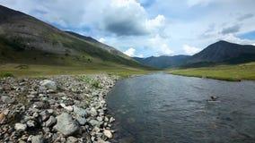 altaidagar sist bergsommar Flod Dara Härlig höglands- liggande Ryssland siberia arkivfilmer