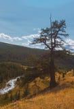 altaidagar sist bergsommar Härlig höglands- liggande Ryssland siberia Royaltyfri Bild