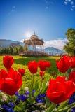 Altan con i tulipani rossi a Bergen, Norvegia Fotografie Stock Libere da Diritti