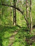 Altanki drzewo w zielonym drewnie zdjęcie royalty free