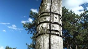 Altar pagano real en el bosque con los ídolos en luz del verano metrajes