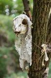 Altare della strega in albero con la palella animale Immagini Stock Libere da Diritti