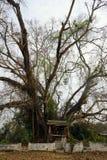 Altare ed albero Immagine Stock Libera da Diritti