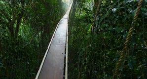 Altas cuerdas sobre selva tropical Imagen de archivo libre de regalías