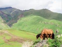 Altas montañas de Georgia con verdor, rastros, caballo fotografía de archivo libre de regalías