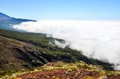 Altas nubes sobre bosque de los árboles del cono del pino Foto de archivo