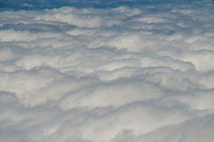Altas nubes sobre bosque de los árboles del cono del pino Imágenes de archivo libres de regalías