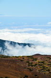 Altas nubes sobre bosque de los árboles del cono del pino Fotos de archivo libres de regalías