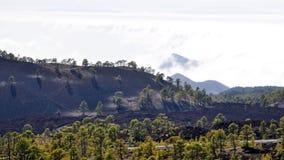 Altas nubes sobre bosque de los árboles del cono del pino en la isla de Tenerife Fotos de archivo libres de regalías