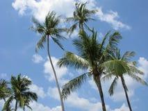Altas palmeras en el viento Imágenes de archivo libres de regalías