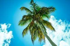 Altas palmeras hacia un cielo azul con las nubes Fotografía de archivo