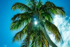 Altas palmeras hacia un cielo azul con las nubes Foto de archivo