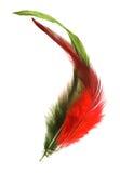 Altas plumas dominantes Imágenes de archivo libres de regalías