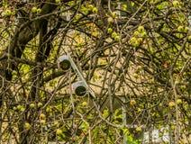 Altavoz blanco del monopatín en ramas del árbol imagen de archivo libre de regalías