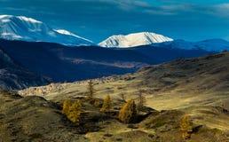Altay Βουνά Χρυσό φθινόπωρο μπλε ουρανός στοκ φωτογραφία