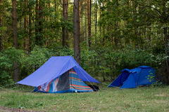 altay Ρωσία δάση σκηνών στοκ φωτογραφία