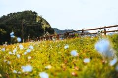 Altay τοπίο βουνών με τα μπλε λουλούδια στο λιβάδι και την περίφραξη Στοκ Φωτογραφίες