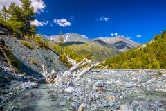 Altay Altai Fotografie Stock Libere da Diritti