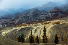 Altay Berg Guld- höst blå sky Royaltyfri Bild