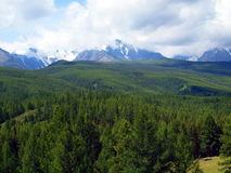 The Altay forests, mountain Altai Stock Image