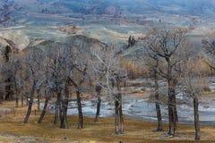 Altay Montanhas Outono dourado Céu azul Fotografia de Stock Royalty Free