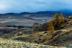 Altay. Mountains. Golden autumn. Blue sky. Stock Photos