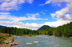 Altay river woods Royalty Free Stock Photography
