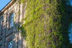 Altbau bedeckt mit Reisig, der Sieg der Natur über dem Gebäude stockfotos
