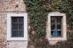 Altbau mit zwei Fenstern und Grünpflanzen Stockbilder