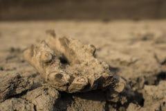 Alte Überreste eines alten Pferds Tausendjähriges Knochentier stockfotografie