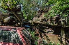 alte überwucherte Autos Stockbilder