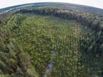 Alte überwucherte Pläne, wo sie den Wald verringerten Stockfoto
