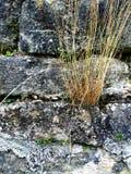 Alte Abteiwand von Sandsteinen Lizenzfreies Stockfoto